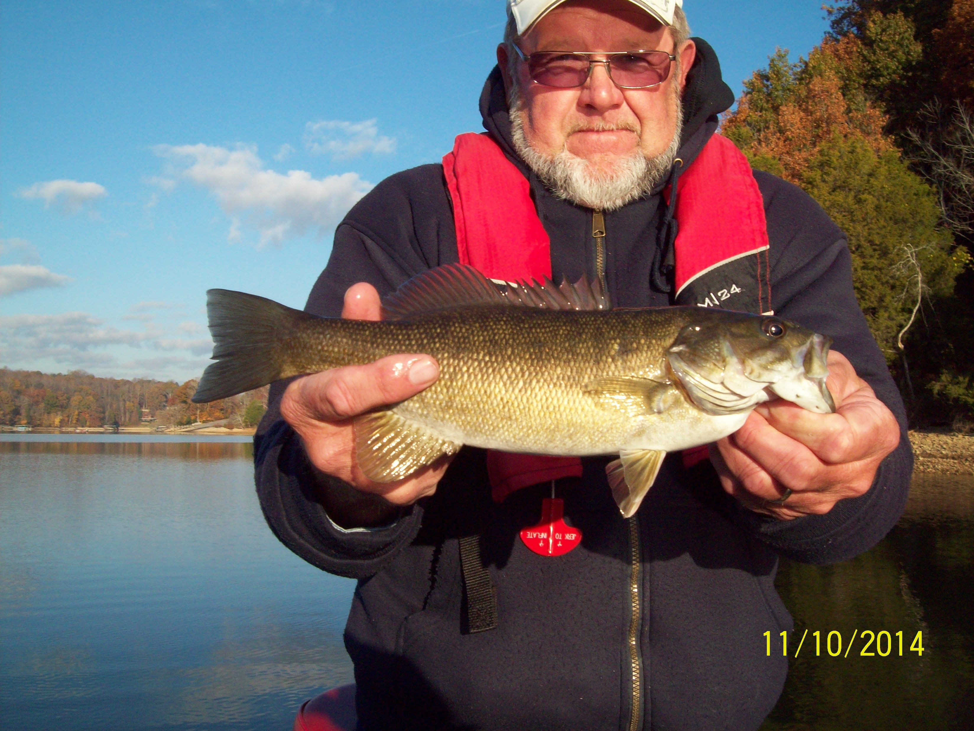 Tim s ford live bait wow 11 11 2014 tennessee bass guides for Bass fishing with live bait