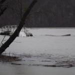 flood feb 2019 004