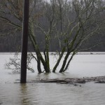 flood feb 2019 005